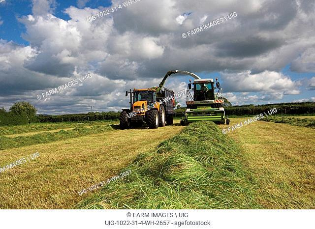 Silaging with a self propelled harvester. (Photo by: Wayne Hutchinson/Farm Images/UIG)