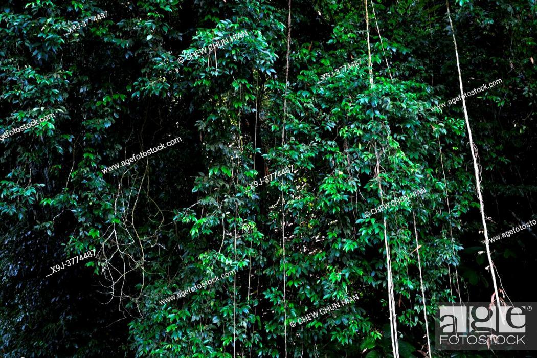 Stock Photo: Tropical rain forest lanscape, kuching, sarawak, malaysia, borneo.