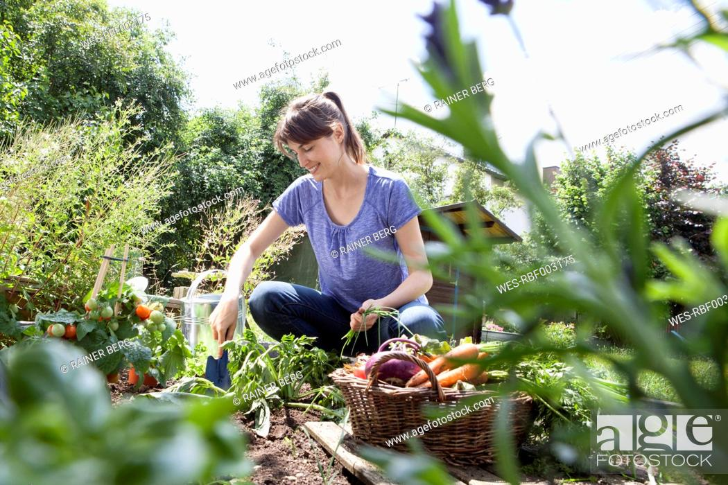 Stock Photo: Smiling woman gardening in vegetable patch.