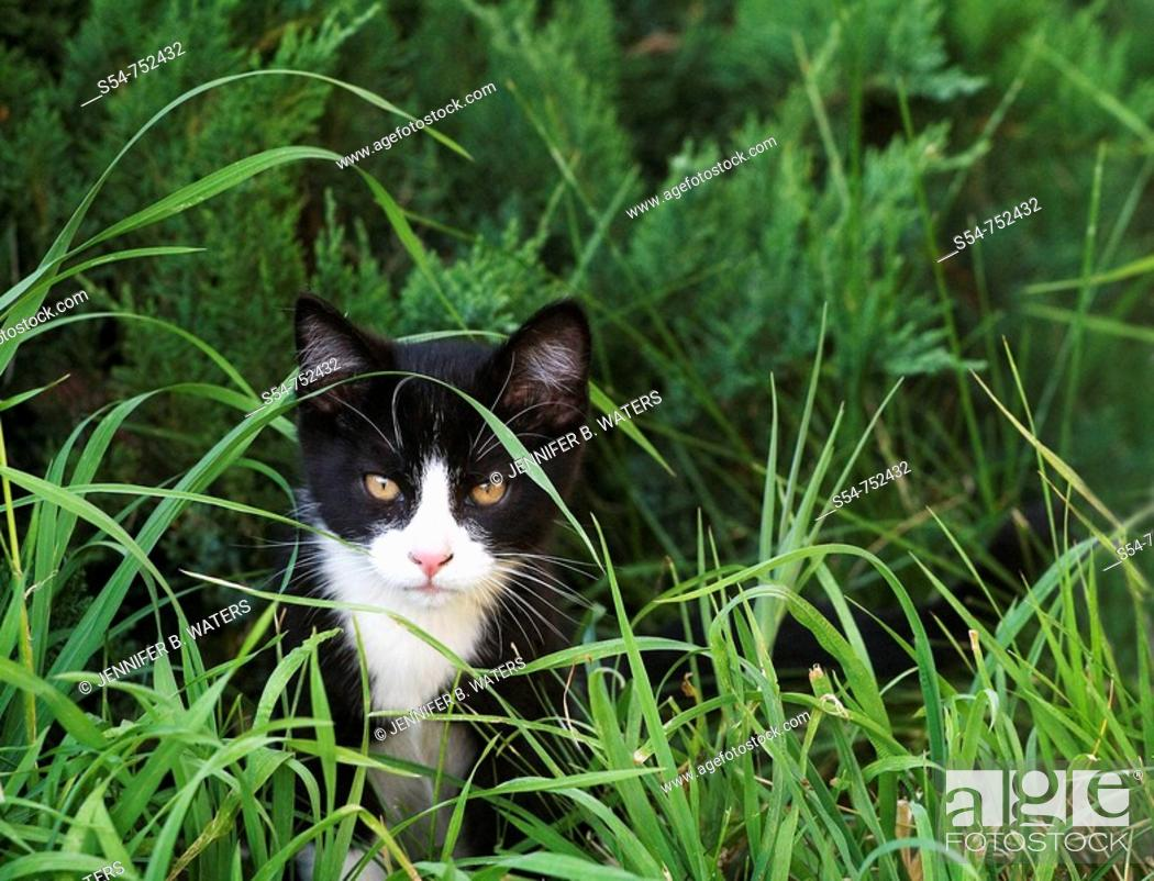 Stock Photo: A black and white kitten outdoors in the grass.