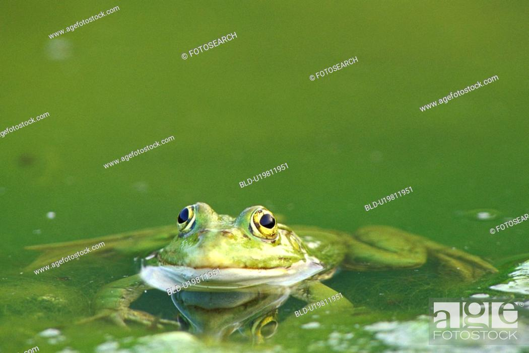 Stock Photo: Christian, close-up, CLOSE, animals.