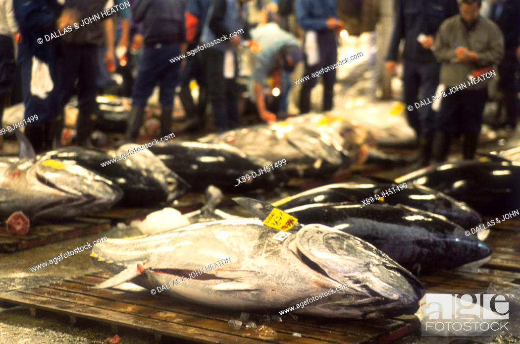 Stock Photo: Japan, Tokyo, Tsukiji Market, Tuna Fish.