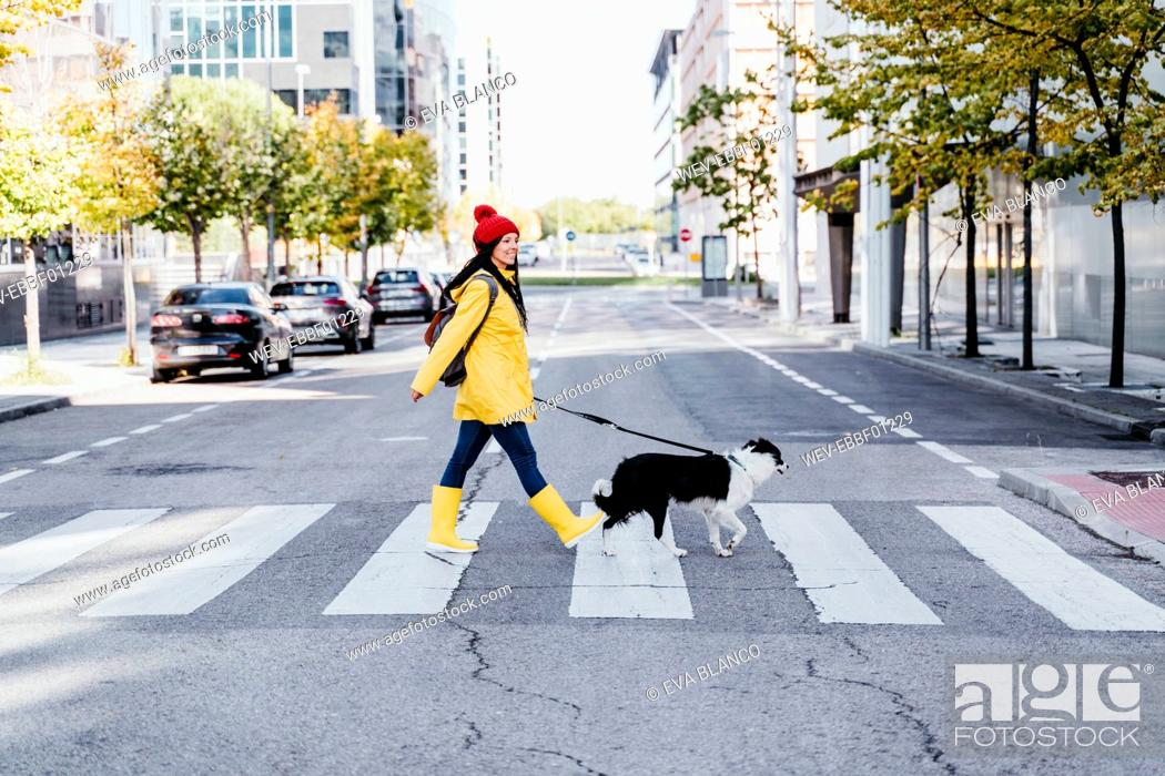 Stock Photo: Woman walking with dog on pedestrian crossing during sunny day.