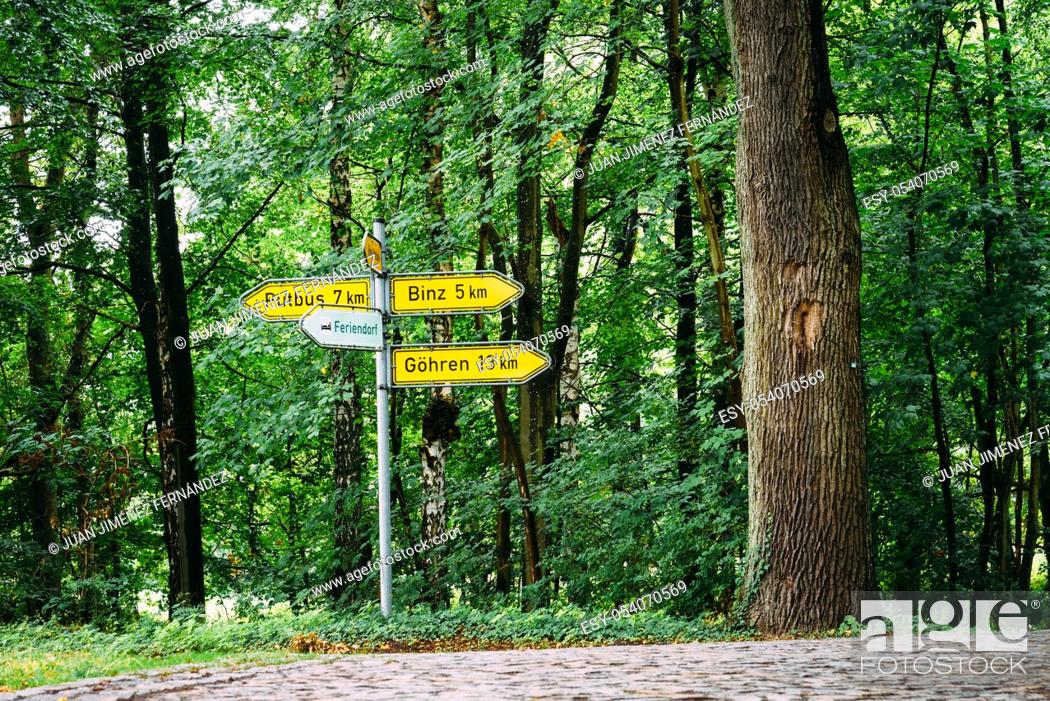 Stock Photo: Crossroads with yellow sign posts in road through beech woodland in Rugen Island. Germany.