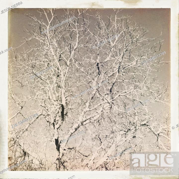 Stock Photo: Abstract tree.