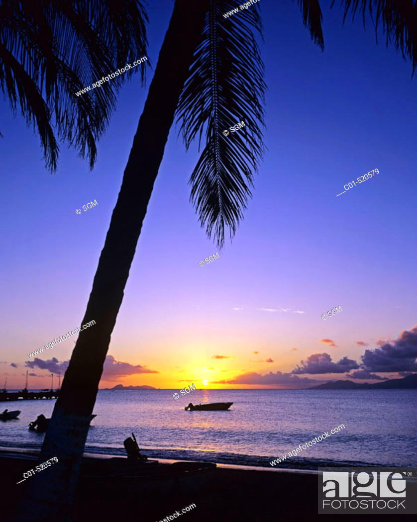 Stock Photo: Fishing boat, palm tree and sea at sunset. Guadeloupe, Caribbean, France.