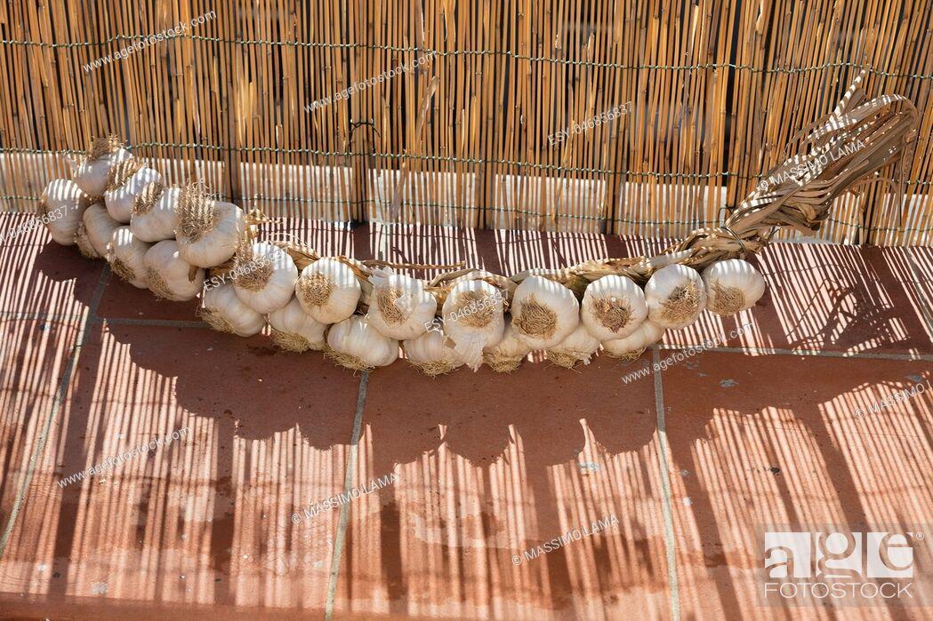 Stock Photo: Neapolitan garlic braid leaning against the wall.