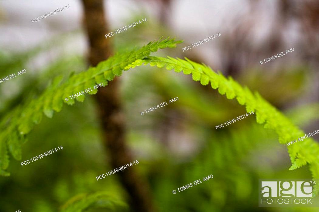 Stock Photo: Close-up of bright green ferns brushing against each other at the top.