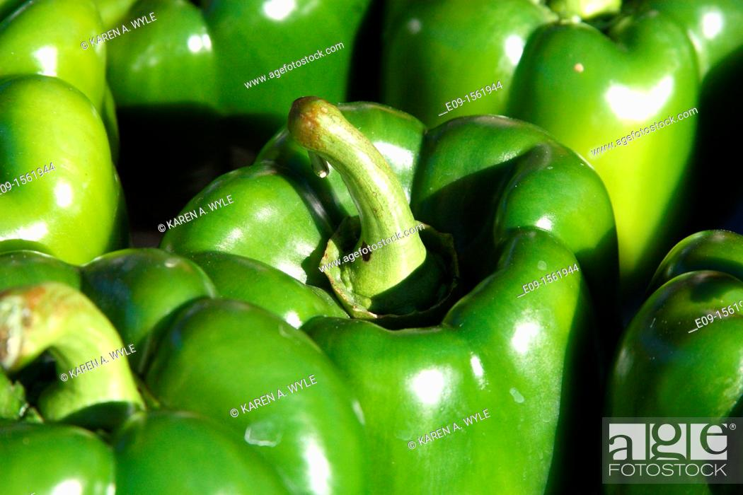 Stock Photo: sunlit green bell peppers as farmers' market, Bloomington, Indiana.