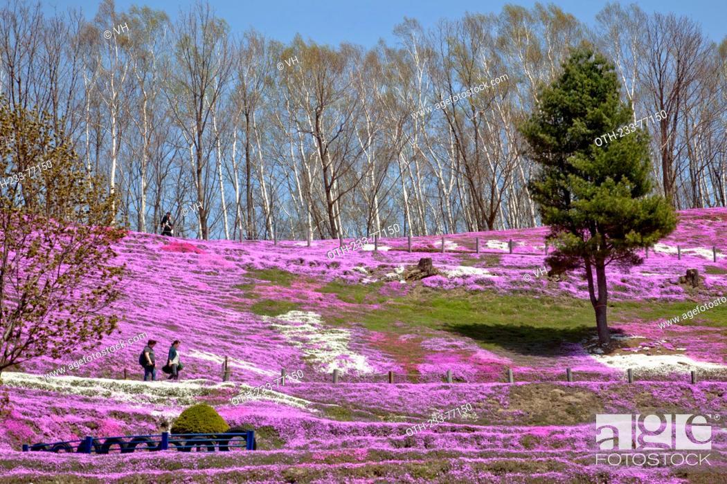 Higashimokoto Shibazakura Park Ozora Cho Abashiri Gun Hokkaido