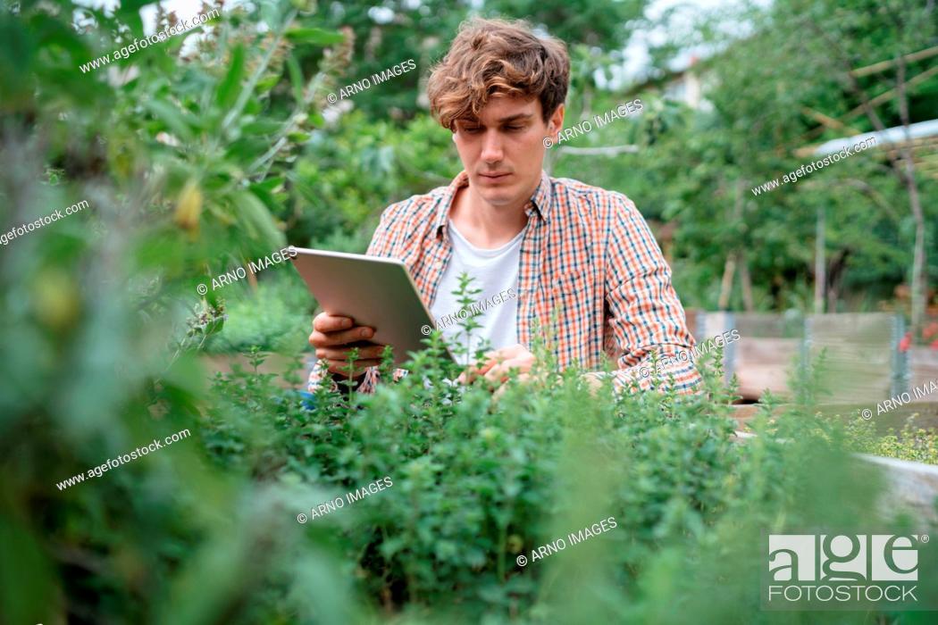 Stock Photo: Man in garden using digital tablet to identify plant.