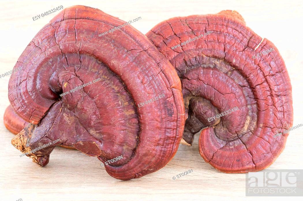 Stock Photo: Ganoderma Lucidum Mushroom or Ling Zhi Mushroom on wood background.