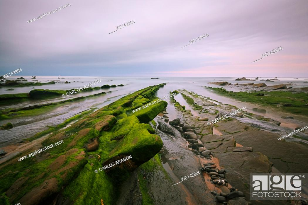 Stock Photo: Green seaweed on rocks in Barrika beach at the sunset, Basque Country, Spain.