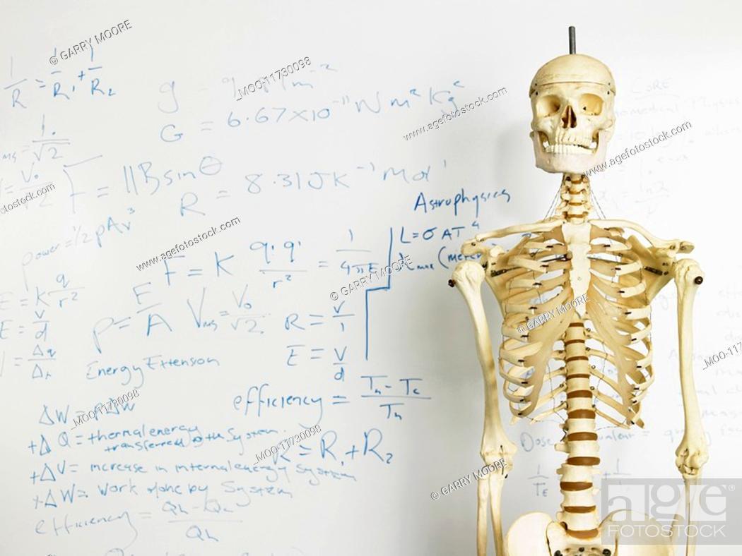 Stock Photo: Skeleton in front of whiteboard.