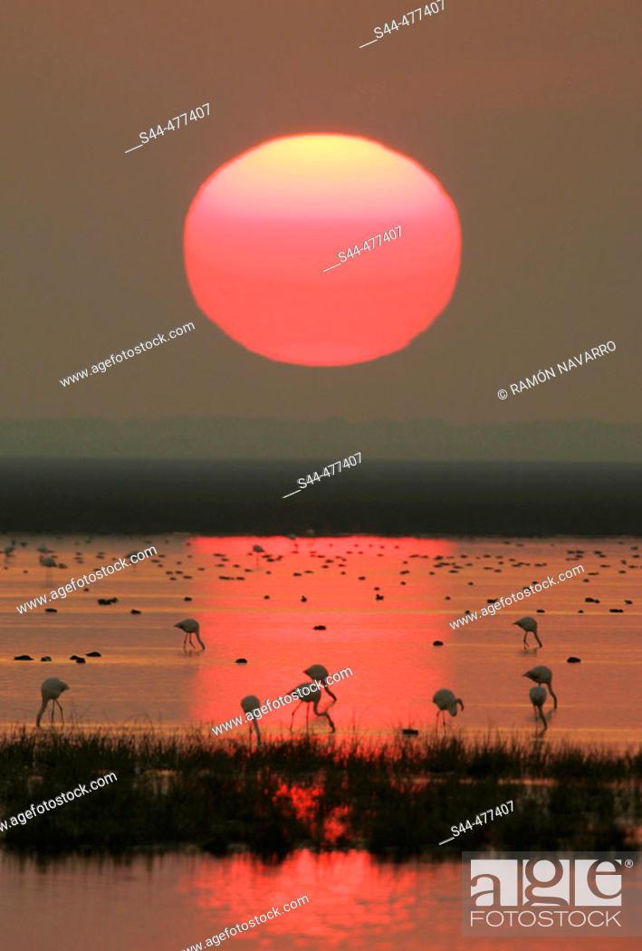 Stock Photo: Evening in Doñana National Park. Huelva province, Andalusia, Spain.