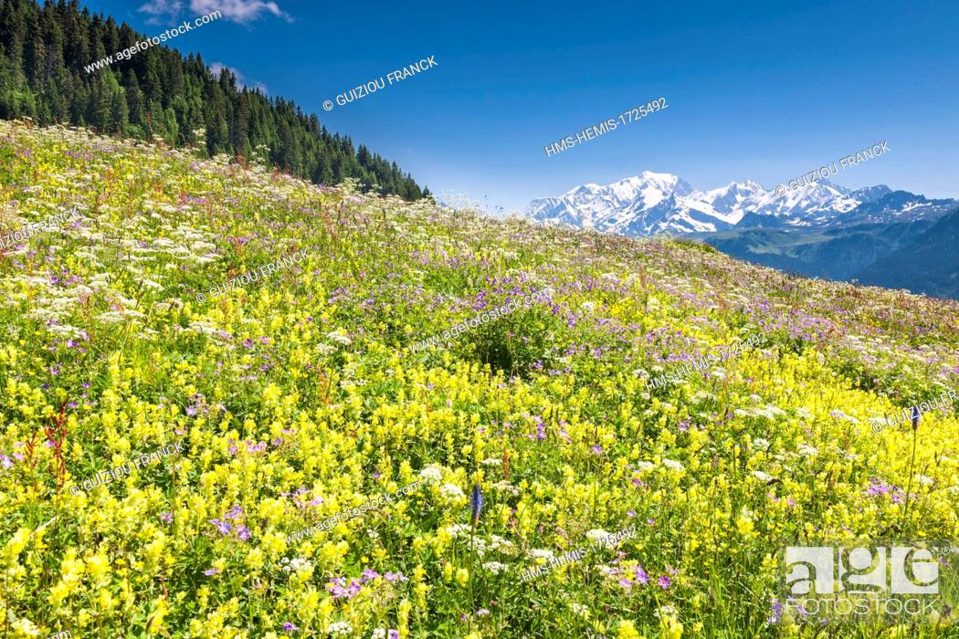 Stock Photo: France, Savoie, Beaufortain region, flowery meadow near Les Saisies and the Mont Blanc in the background.