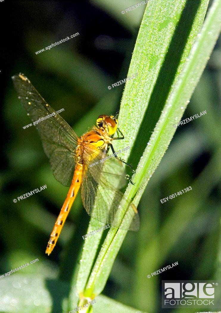 Stock Photo: Dragonfly.