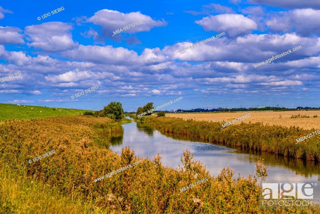 Germany, Schleswig-Holstein, North Frisia, North Frisian marsh ...