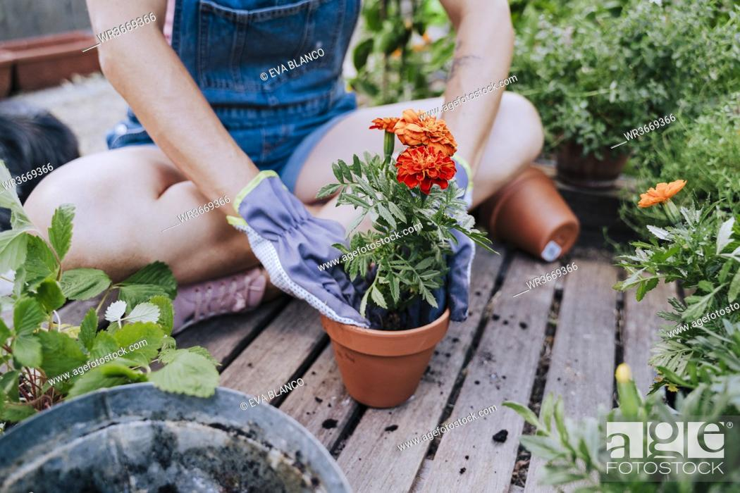 Stock Photo: Close-up of mid adult woman planting flower in pot while sitting at garden.