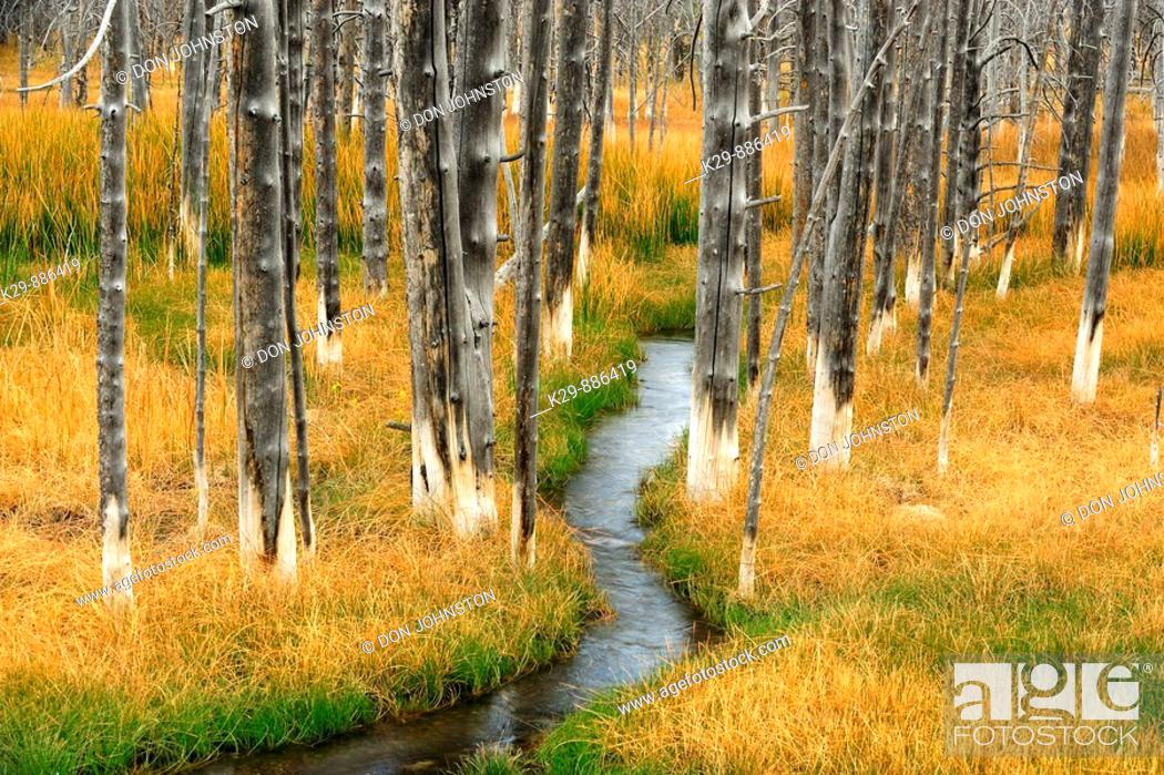 Stock Photo: Wetlands with grasses, dead tree snags and stream.