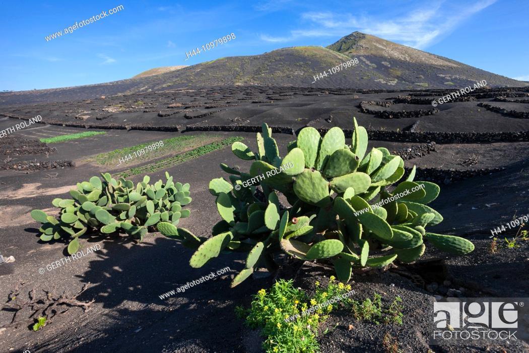 Stock Photo: La Geria, Spain, Europe, Canary islands, Lanzarote, volcano earth, volcano ground, volcanical, wine-growing, stone walls, cacti.