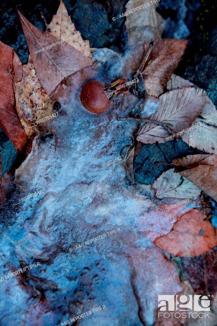 Imagen: Leaves in frozen water.