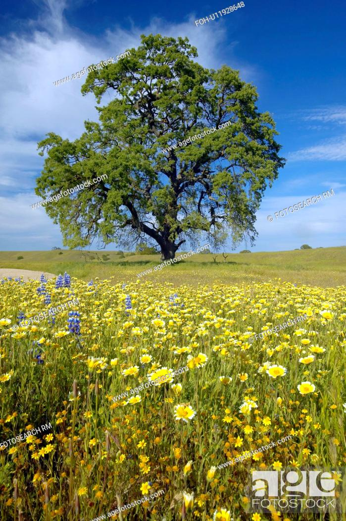 Stock Photo: Lone tree and colorful bouquet of spring flowers.