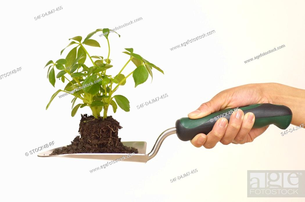 Stock Photo: Person holding trowel with seedling.
