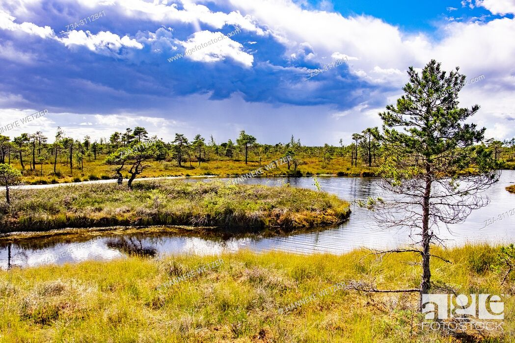 Stock Photo: Kemeri Bog Trail, Kemeri National Park, Latvia, Baltic States, Europe.