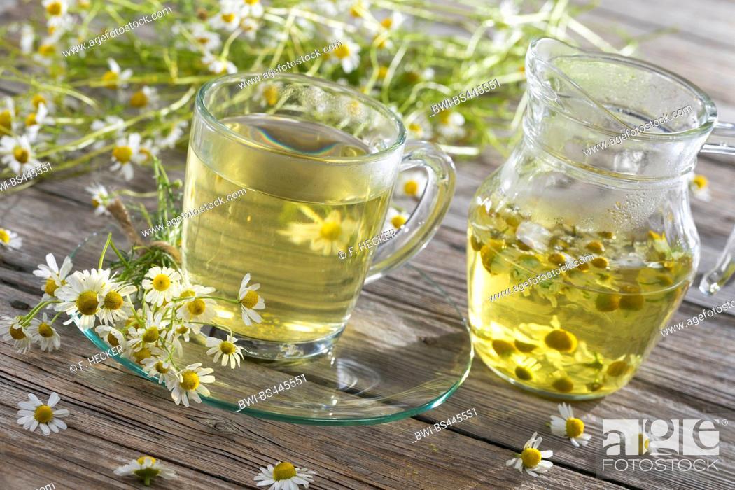 Stock Photo: scented mayweed, german chamomile, german mayweed (Matricaria chamomilla, Matricaria recutita), chamomile tea, Germany.