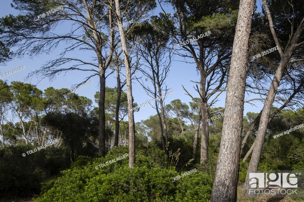 Stock Photo: Mondragó Natural Park, municipality of Santanyí, Mallorca, Balearic Islands, Spain.