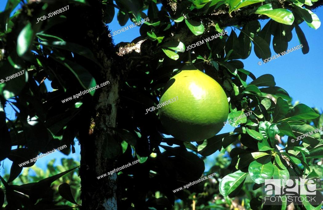 Stock Photo: Tropical fruit.