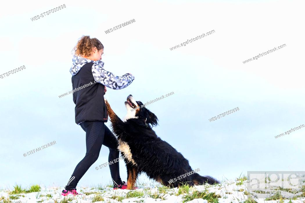 Stock Photo: Young woman playing with her Saint Bernard on snow-covered meadow.