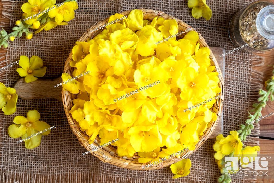 Stock Photo: Fresh denseflower mullein flowers in a basket, top view.