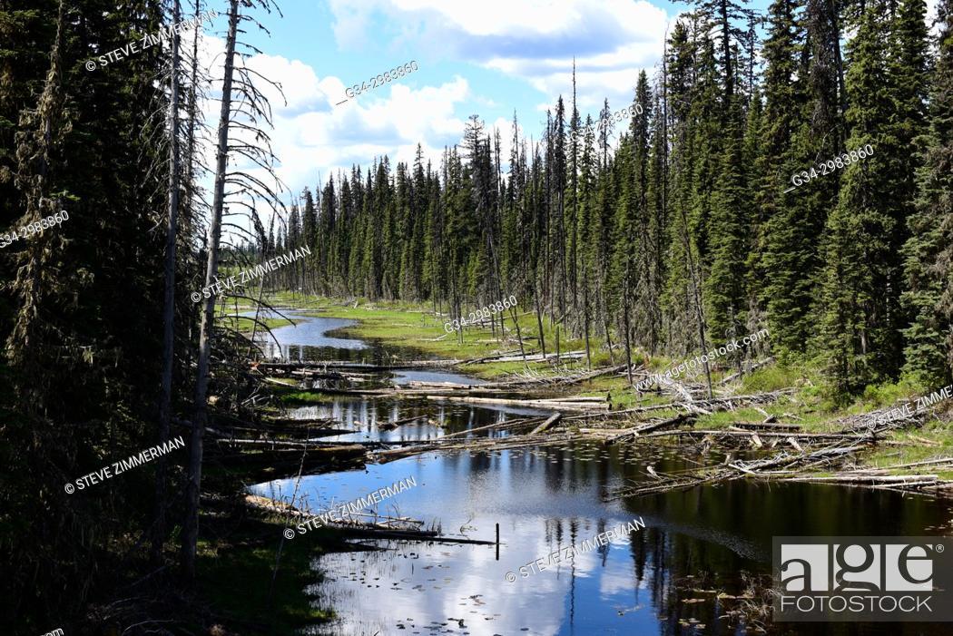 Stock Photo: Timber Creek, Alberta, Canada.
