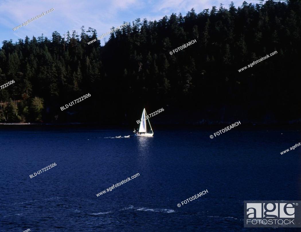 Stock Photo: forest, nature, tree, mountain, scene, river, landscape.