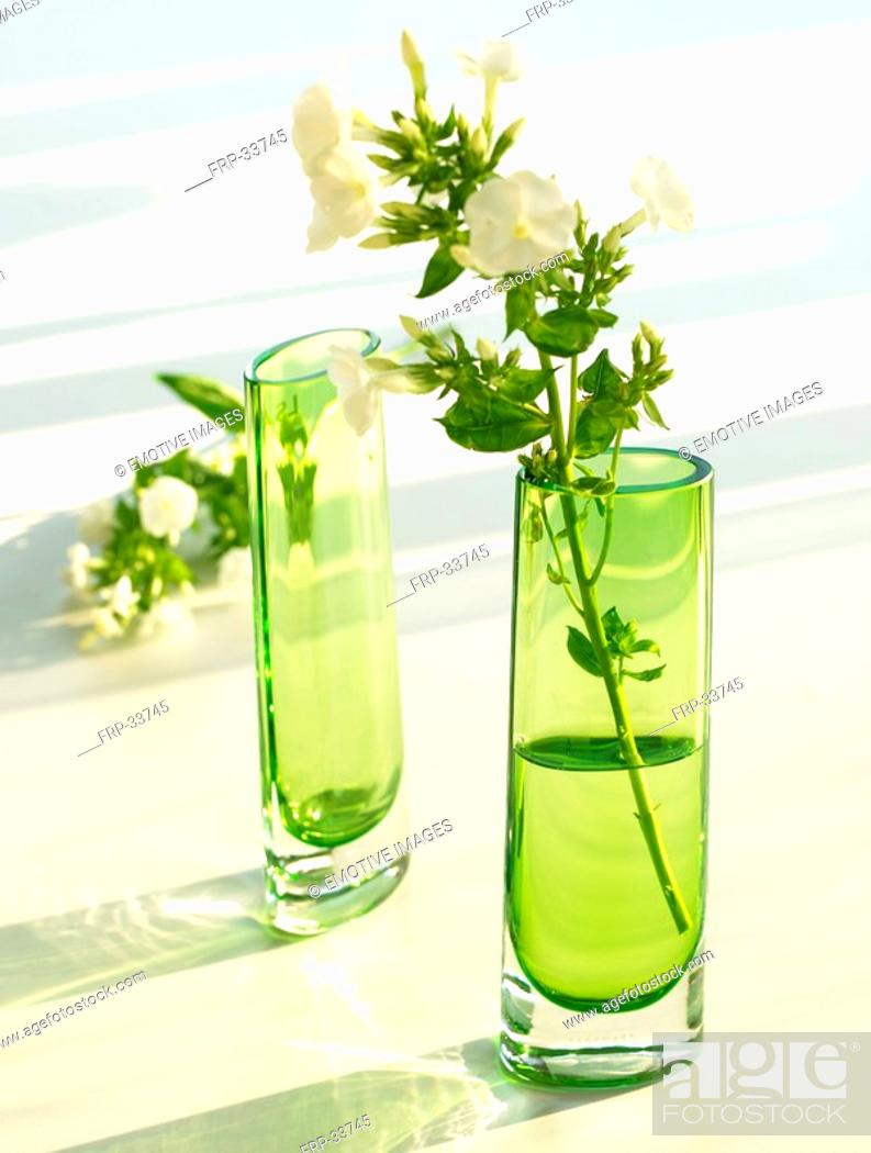 Stock Photo: Green glass vases with Phlox.