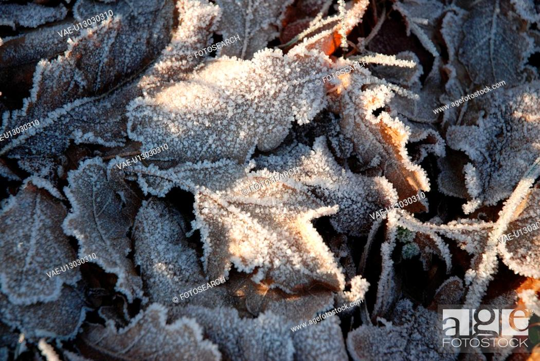 Stock Photo: vorbei, reif, Austria, cold, contrast, eiskristalle, frosty.