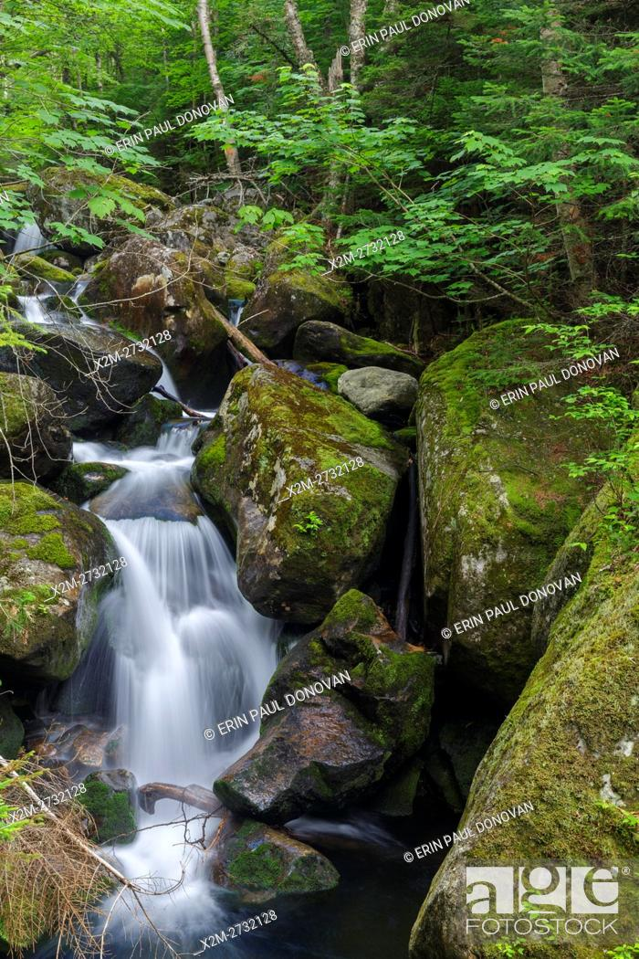 Stock Photo: Cascade #8 along Cold Brook in Low and Burbank's Grant, New Hampshire during the summer months.