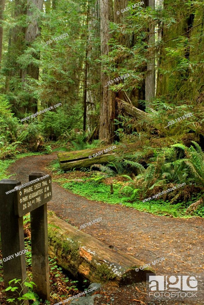 Stock Photo: Trail sign at trail junction in old growth coast redwood forest, Prairie Creek Redwoods State Park, California.