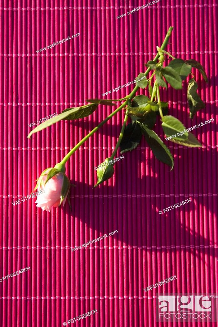 Stock Photo: Curtain, Flower, Indoors, Leaf.