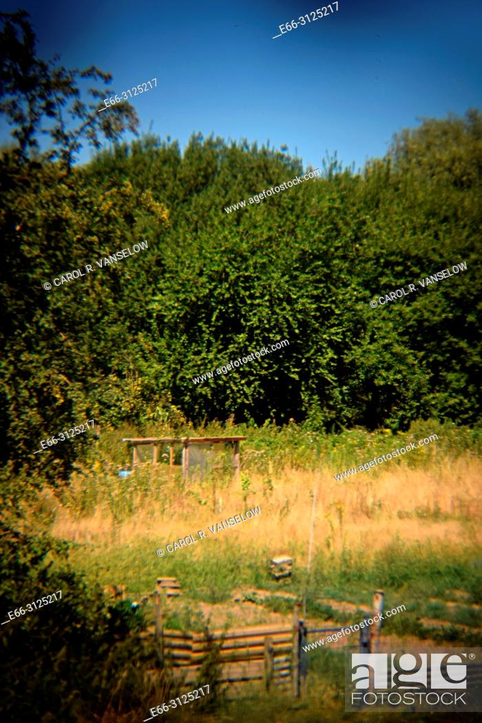 Stock Photo: Community garden in Heerlen in the province of Limburg in the Netherlands. Shot with Holga lens for selective focus.