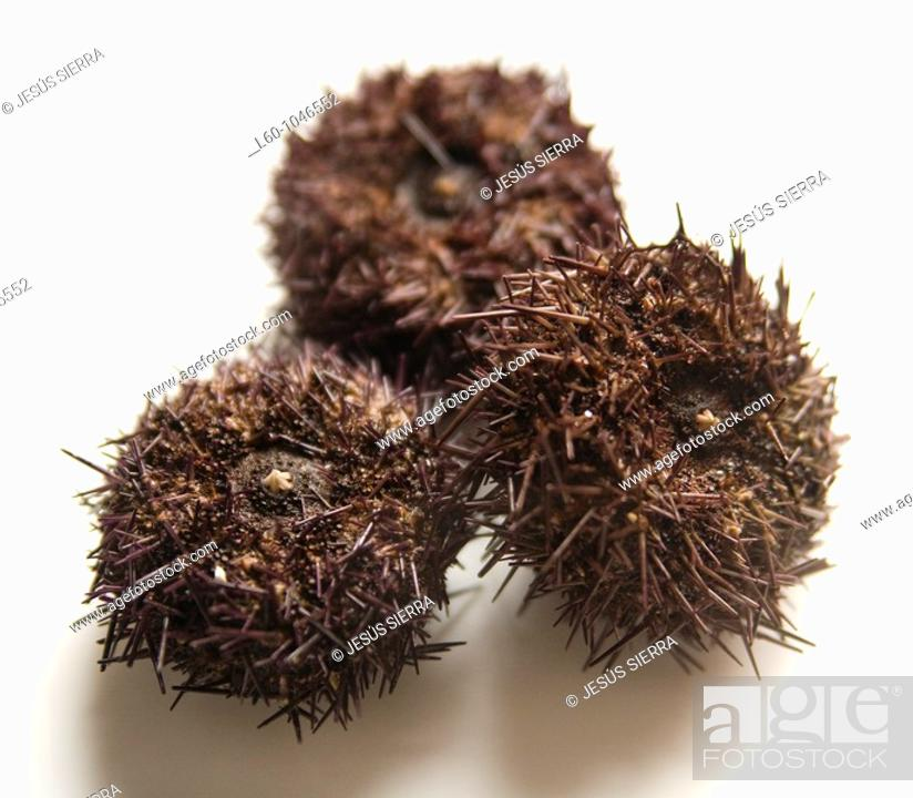Stock Photo: Sea Urchin.
