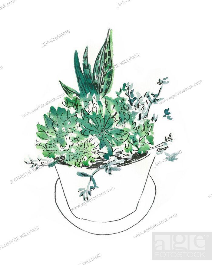 Imagen: Plants in flower pot.