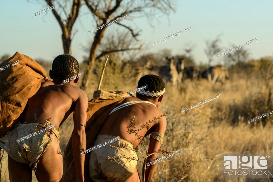 Stock Photo: San or Bushman men stalking Burchell's zebra (Equus quagga burchellii). Haina Kalahari Lodge. Botswana.