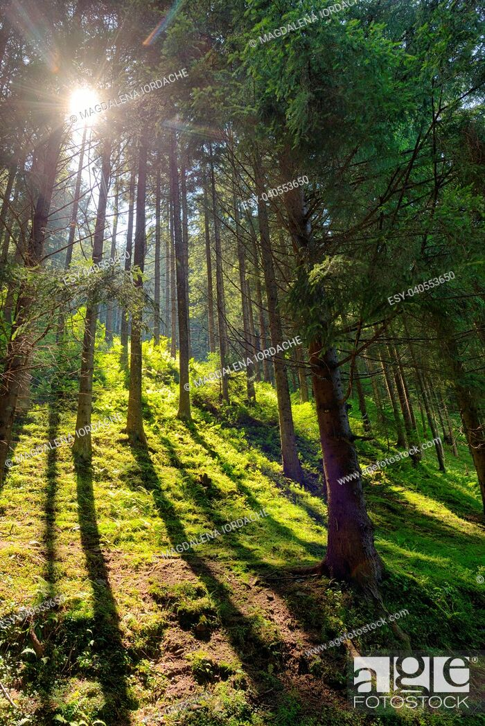 Imagen: Scene Forest with Sun Rays in summer.