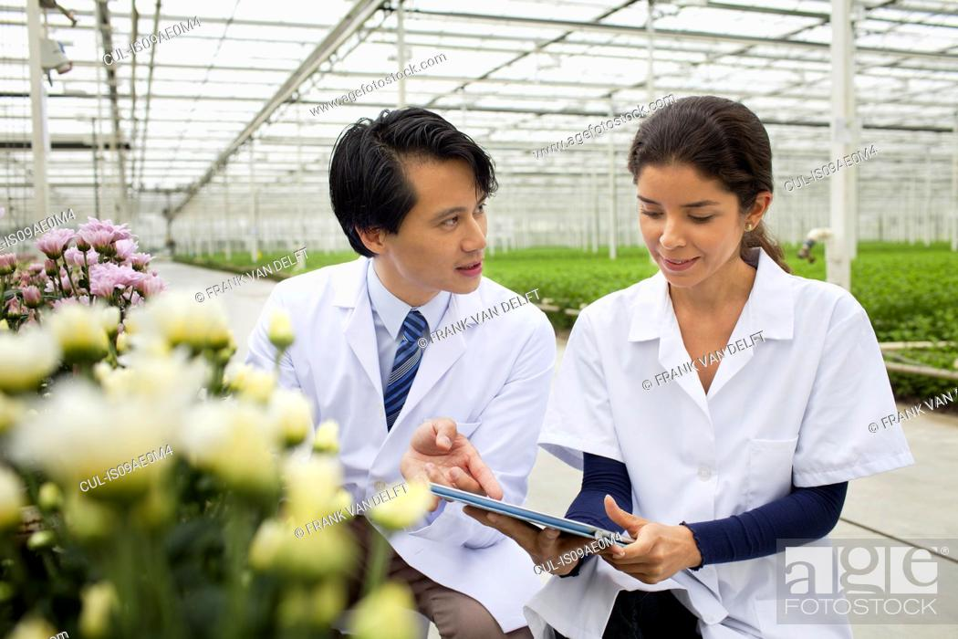 Stock Photo: Man and woman with rows of plants growing in greenhouse.