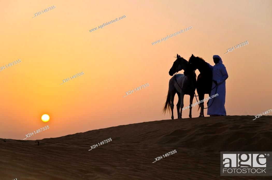 Stock Photo: Arabian Horse in the Arabian Desert.