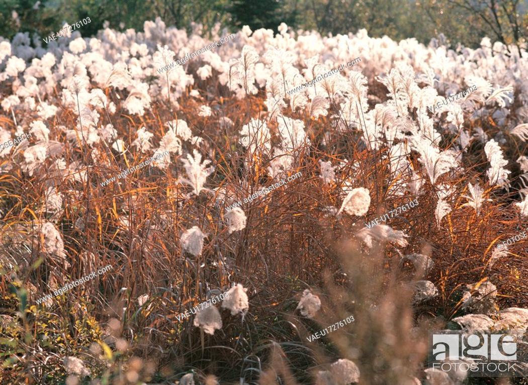 Stock Photo: grasses, background, grass, plants, plant, landscape.
