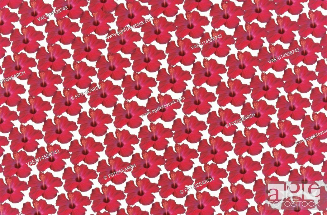 Stock Photo: The Sheet Of A Red Hibiscus.